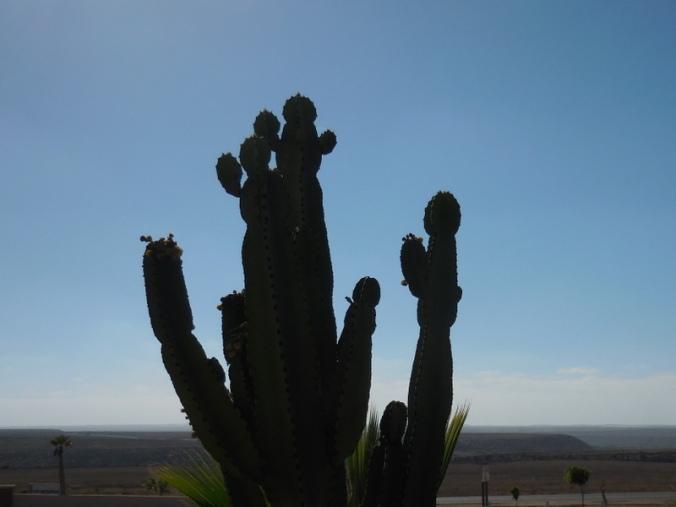 Cactus in siloette