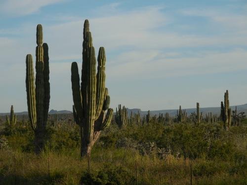 Desert morning 1