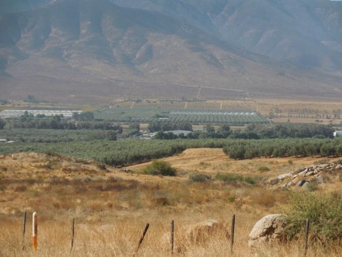 La Palma Valley 1