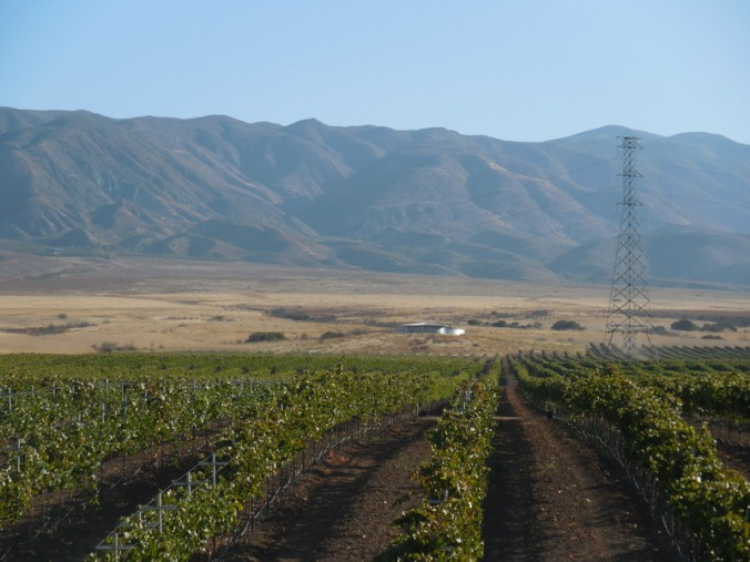 More wine in Baja