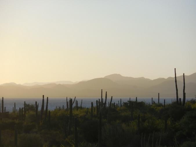Morning Cacti