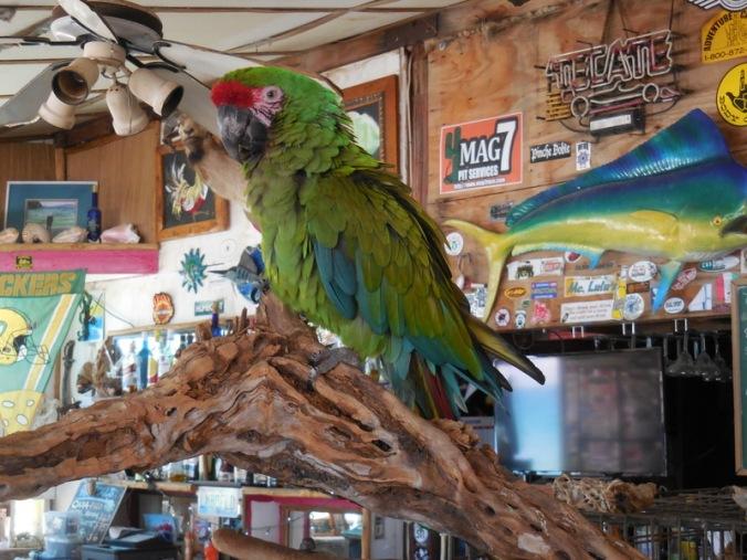 PVB Bird 1