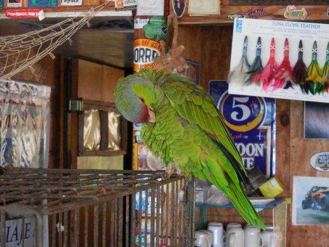 PVB bird 2