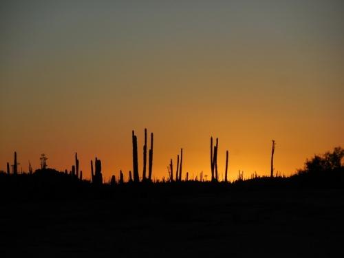 Sucuro Sunset 5