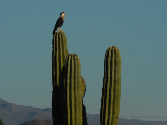 Unknown desert bird