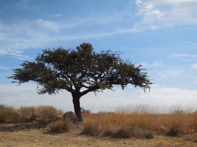Highlands tree
