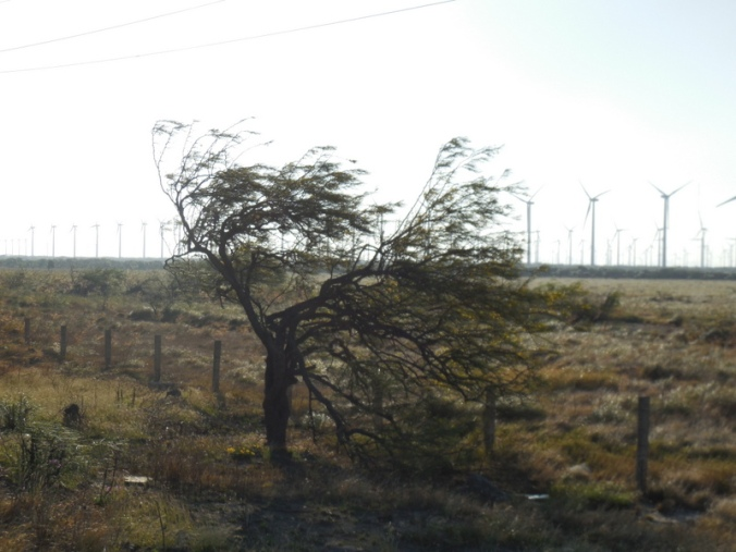 A tree fighting the wind