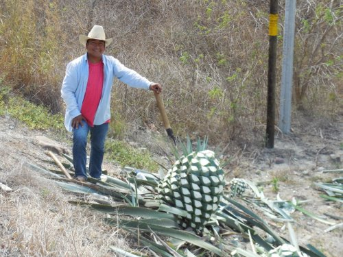 Agave cutter, happy to have his photo taken