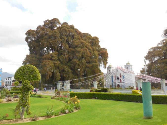 Big tree, er, bush