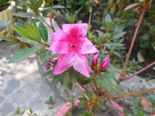 Flowers in garden 2