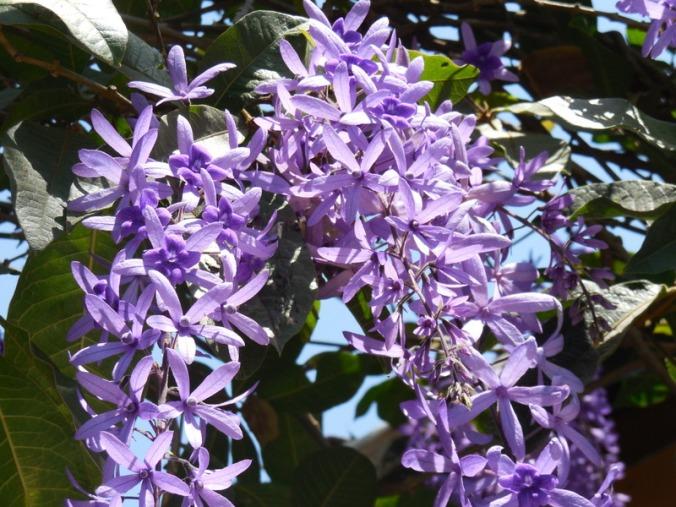 Flowers in garden 5