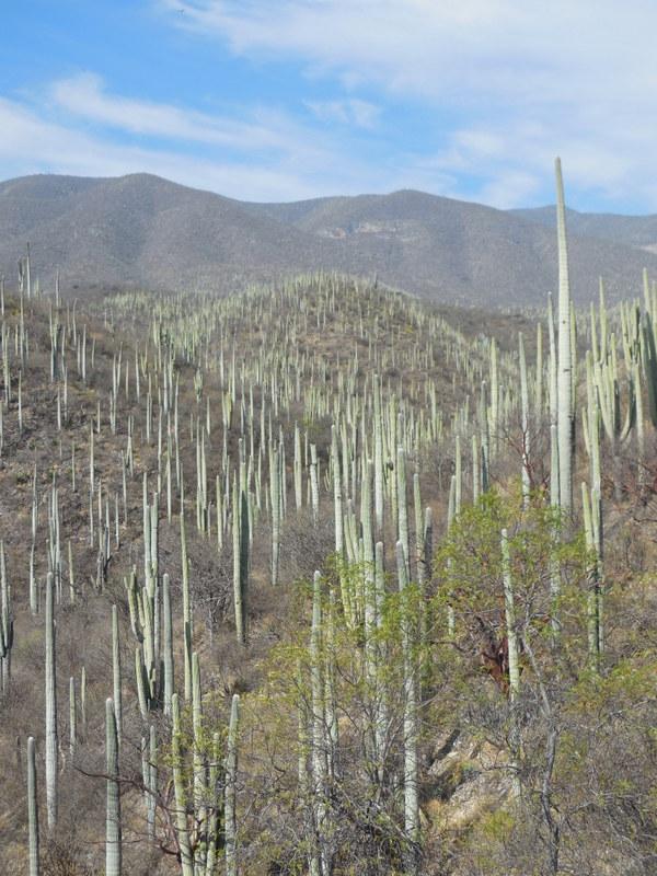 Heading into the cactus 2