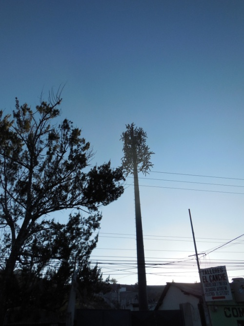 Mobile tower diguised as a tree