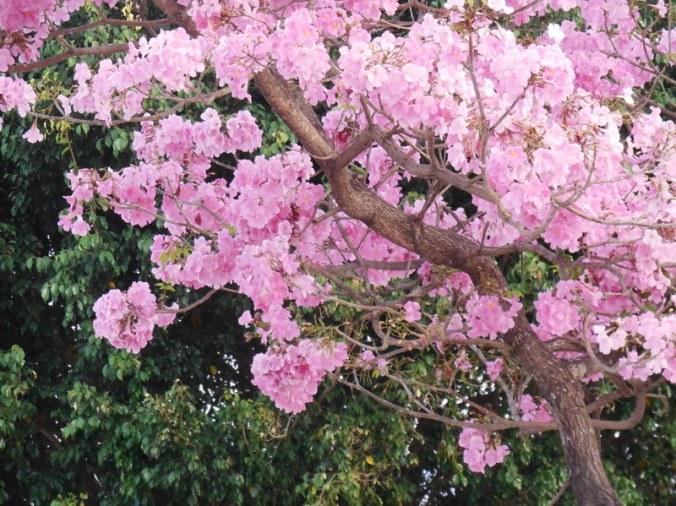 Morning blossums