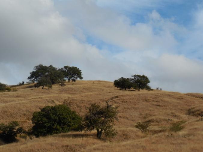 Morning hillside