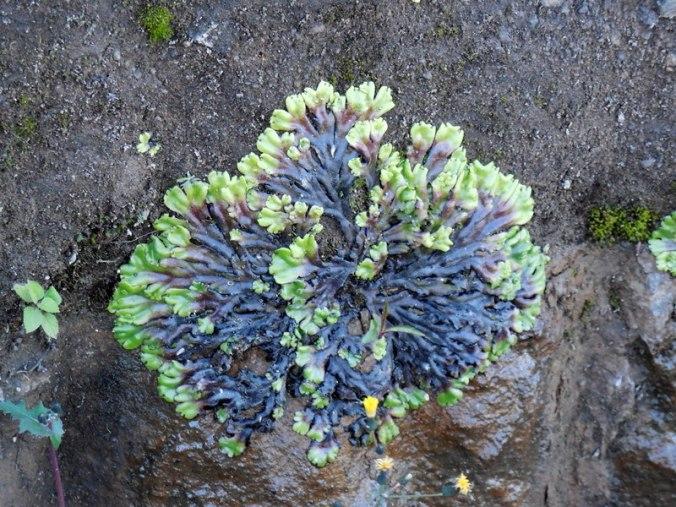 new weird fern on rock 2