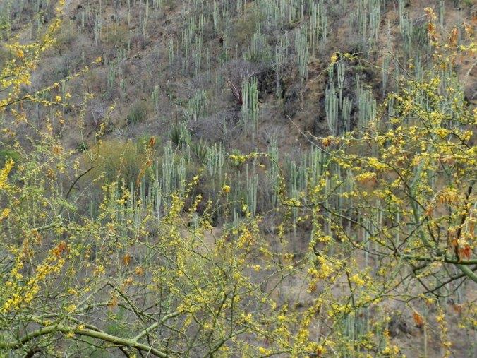 Oaxaca cacti 4