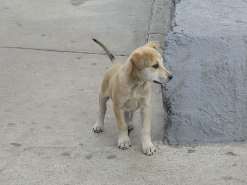 Rest stop pup