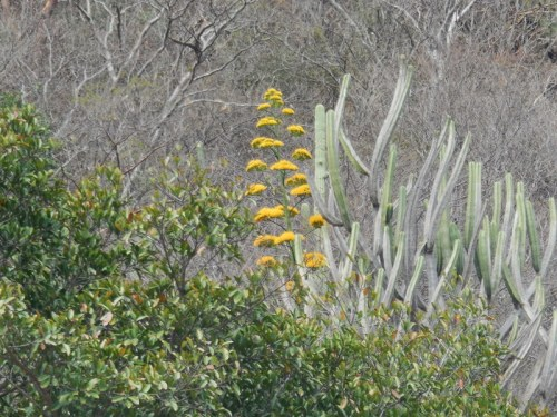 Third flowers 1