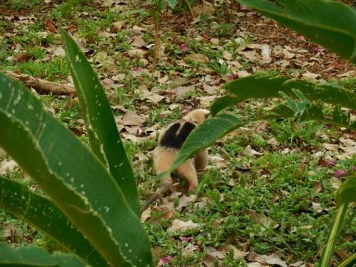 Ant eater 2