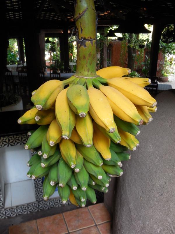 Bananas at hotel