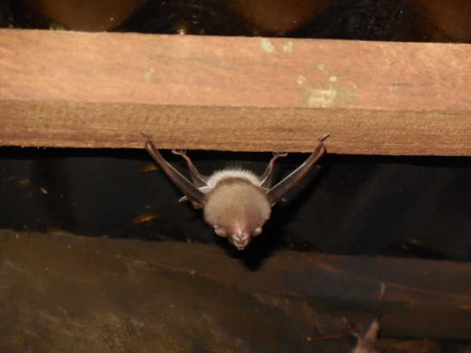 Bats in the dining hall