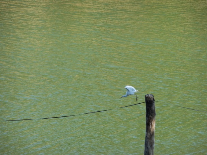 Bird at lake