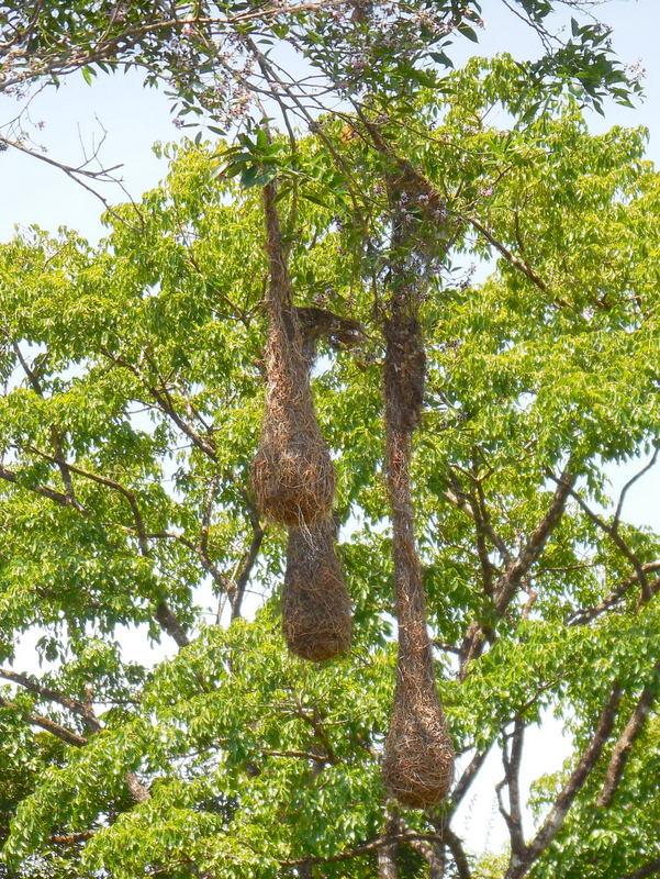Bird nests 1