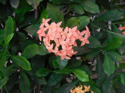 Garden flower 2