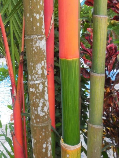 Garden plant 3