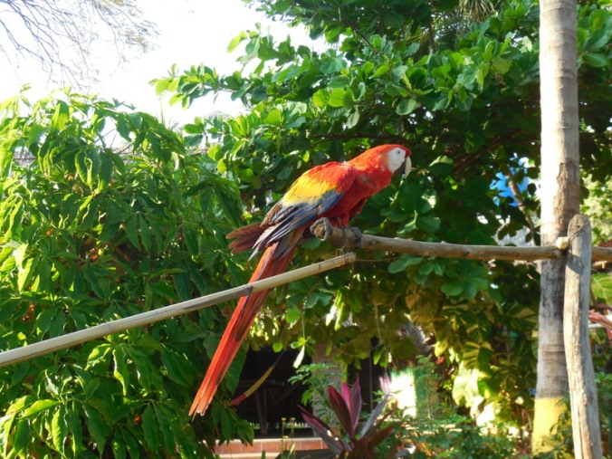 Hotel bird