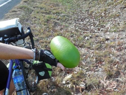 Morro fruit 1