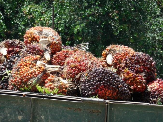 Palm oil 2