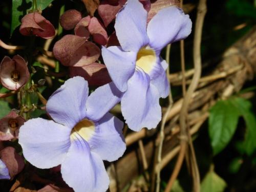 Roadside flower 3