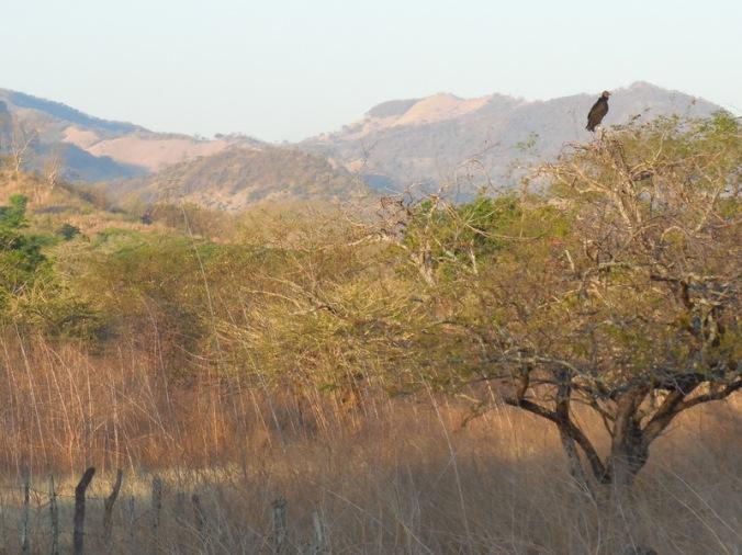 Santa Rosa view