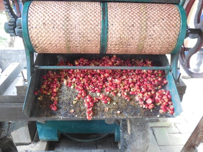3 wate cherry husks