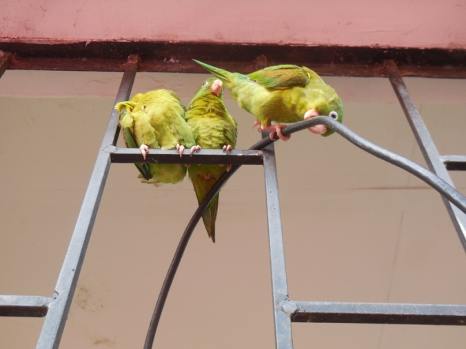 Birds at station 1