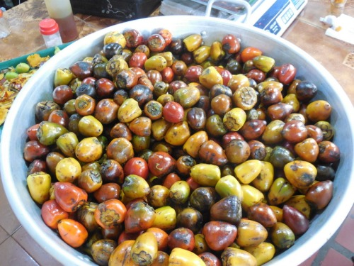 Fruit - Chontadoru 4
