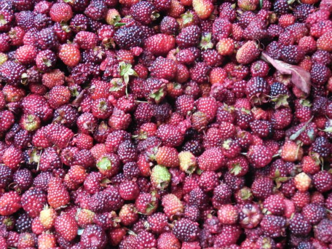 Fruit - Mora