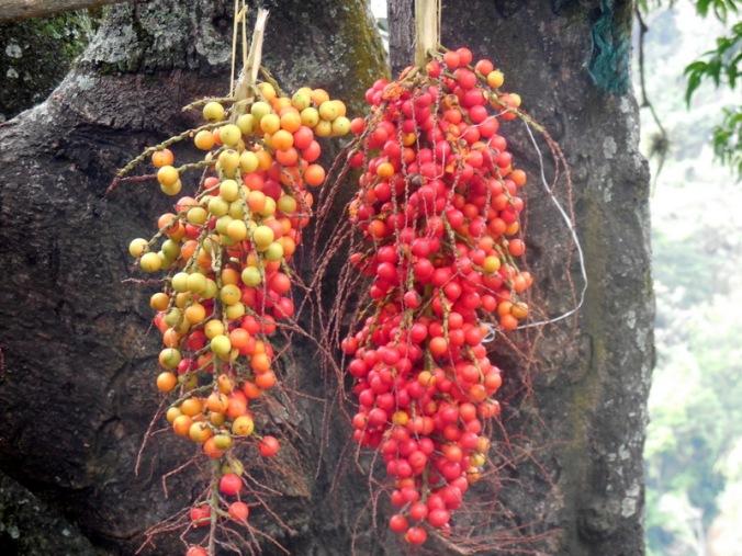 Fruit seller wares 1