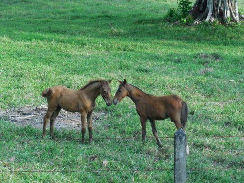 Horses - ponys playing