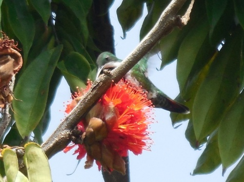 New flowers scene in Columbia - with humming bird