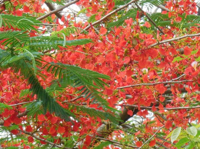 New red tree 2