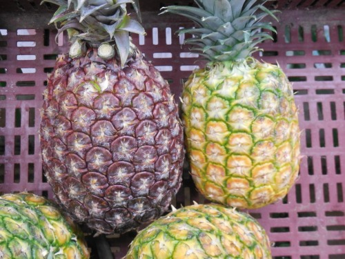 Red and normal pinapples