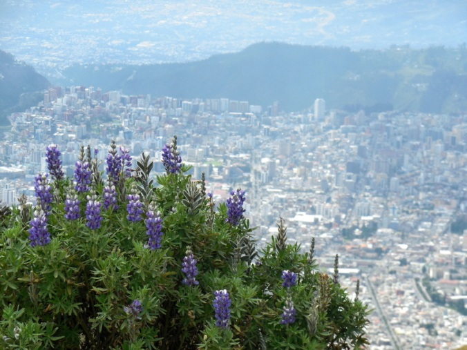 City view 9