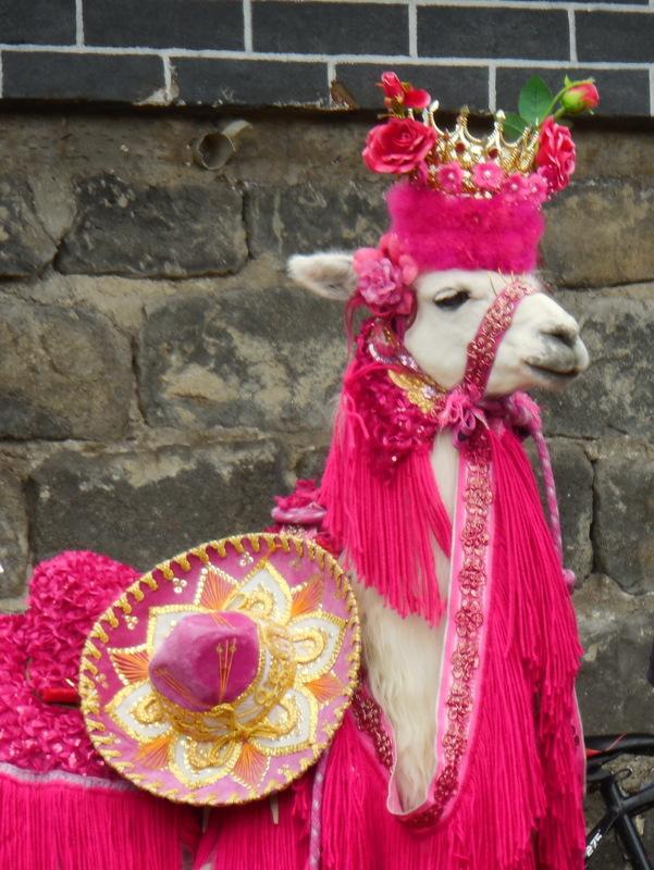 Llama at Las Lajas 1