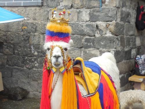 Llama at Las Lajas 2