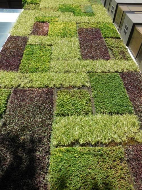 Verical garden 2