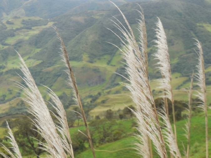 Andes in the rain 8
