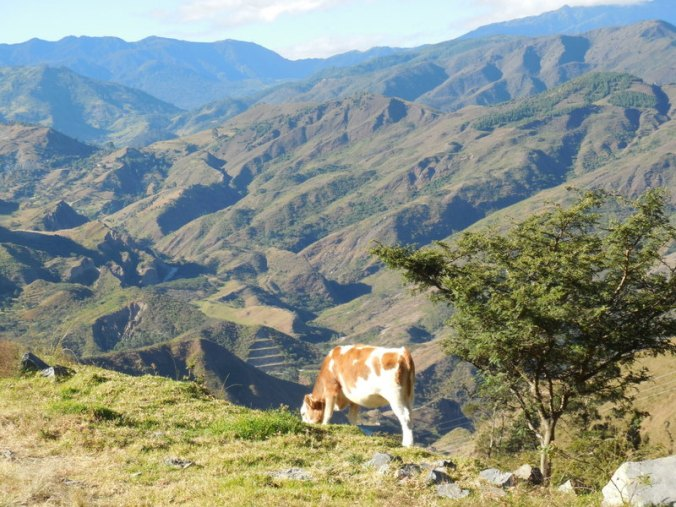 Cow and Andes